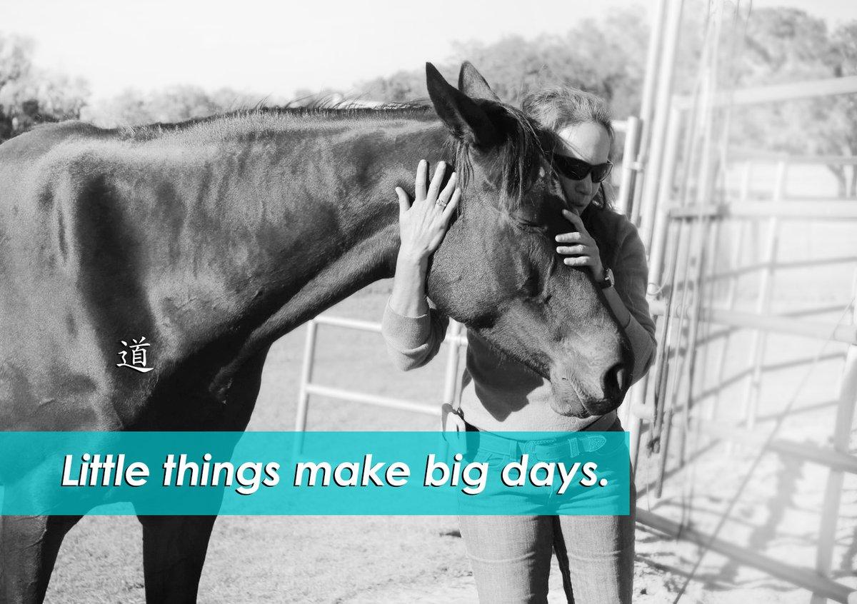 Little things make big days!  #carolinebeste #taoofhorsemanship #jointherevolution #equestrian #horsetraining #horseriding #floridahorses #instahorse #horselove #holistichorse #horsemanship #naturalhorse #naturalhorsemanship #inspire #inspiration #motivationpic.twitter.com/dXoepi5JJn