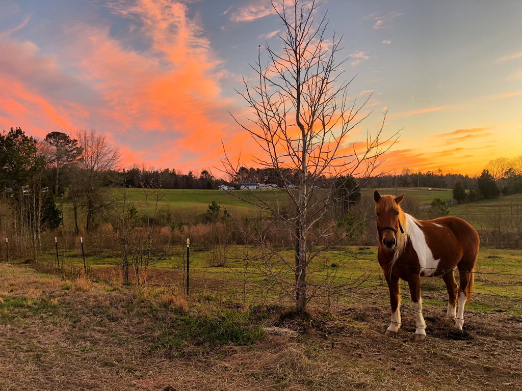 Beautiful evening on D&L Farm near Natural Bridge @spann