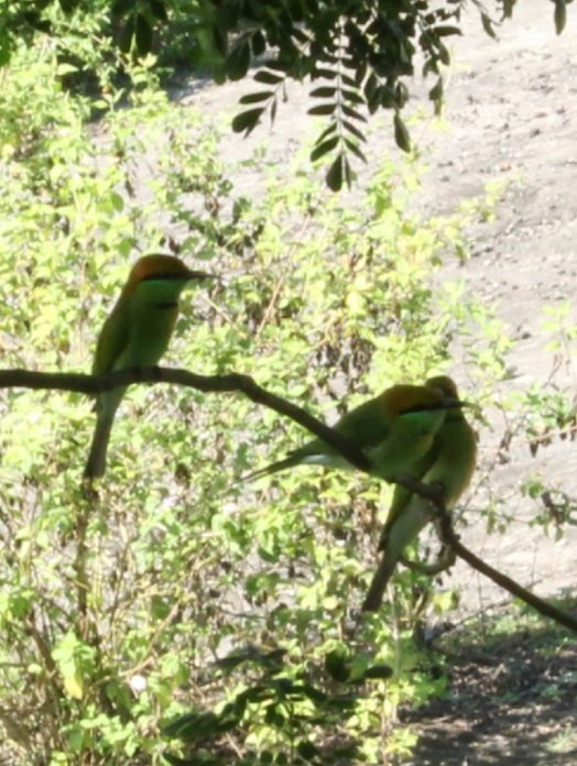 #Beautiful Birds #wednesdaymorning #birds photography #relax nature                  Good morning gggg.              Very beautiful Relaxing birds .                   🐦.           🐦 🐦