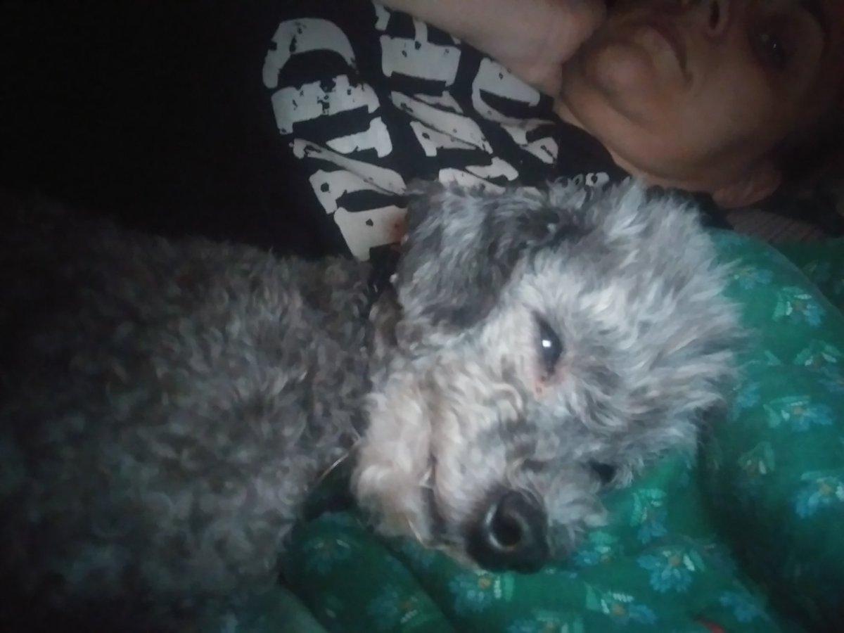 Sleepy.. But always time for a #selfie #DogsofTwittter #dogs #sleep