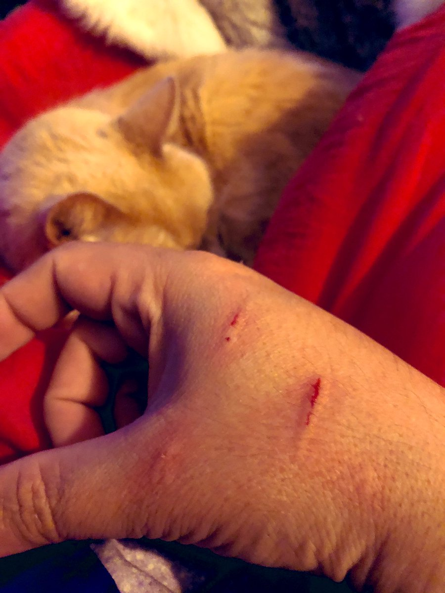 I fought the #cat and the #cat won!!! #CatsOnTwitter