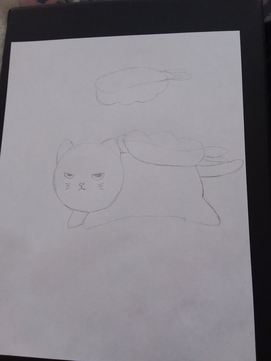 Ebi sushi cat ~ MaidUN  #art #artist #anime #cat #sushi #shrimp #ebisushi #catsushi #sketch #drawing