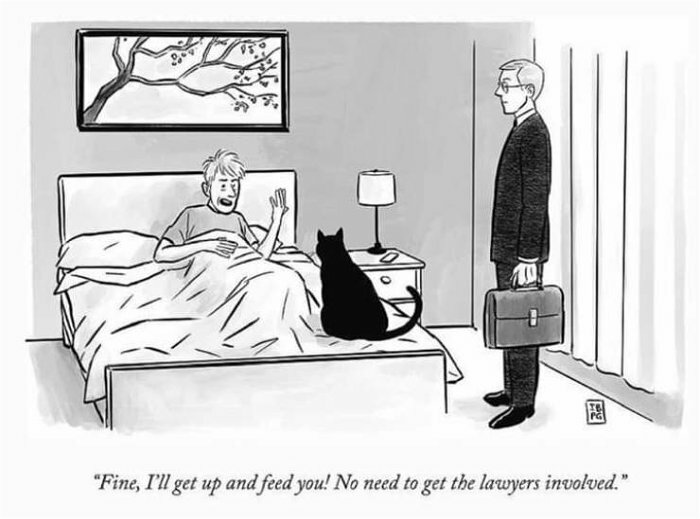 fine i will feed you #funny #lol #comedy #fun #humor #meme #RT #DailyHaha