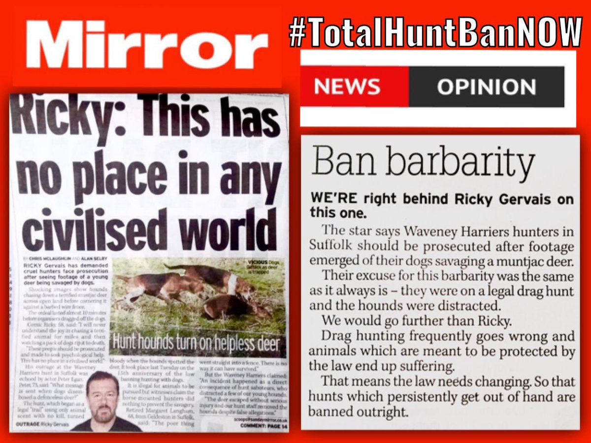Week on from shocking savagery of #Waveney Harriers' hounds mauling a terrified deer & venal, cold dismissive, 'calm down' said by hunt supporter to distressed lady #WednesdayWisdom: join @rickygervais @PeterEgan6 & tell the #KickOutCruelty & #GoCleanBoot 🏃♀️ #TotalHuntBanNOW 🦌 twitter.com/nshuntsabs/sta…