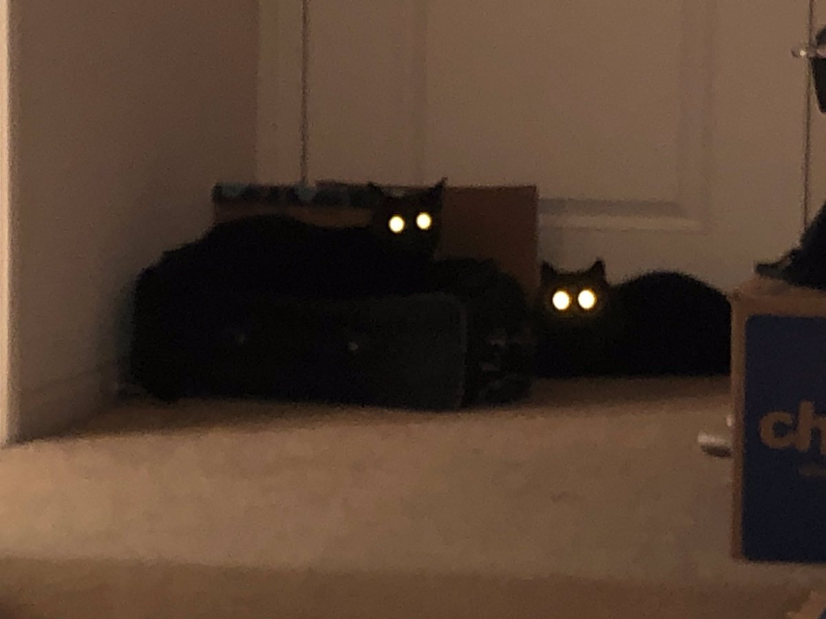 *we start packing to go out of town* the cats: