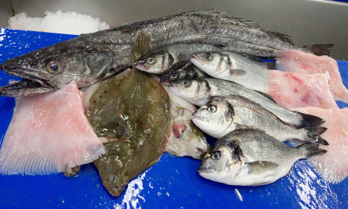 Looking for a supplier - Brown & May deliver to chefs daily across East Anglia - Fresh Fish, Frozen , a full range of Dried & Chilled goods. 01379 870181 #buylocal #localsupplier #eatmorefish #fishisthedish #localproductspic.twitter.com/ZKozdvTWVO