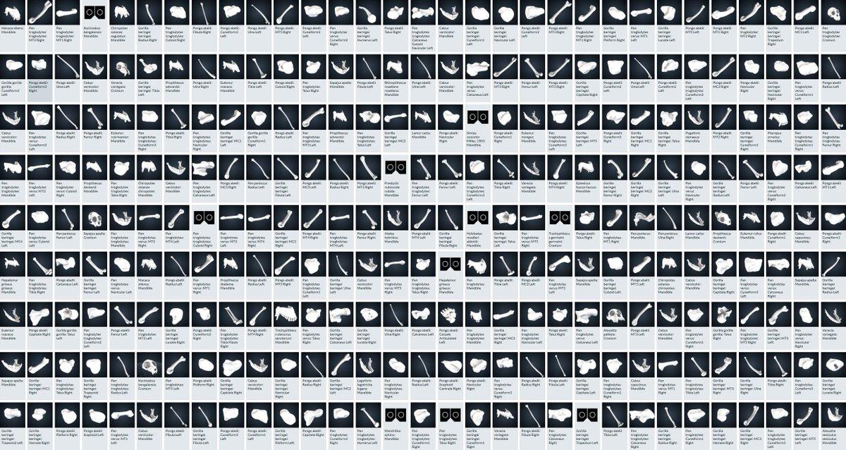 スミソニアン博物館が3DモデルをCC0で大量配布すごい!!どんなのがあるんだろ↓_人人人人人人人_> ほとんど骨 < ̄Y^Y^Y^Y^Y^Y ̄