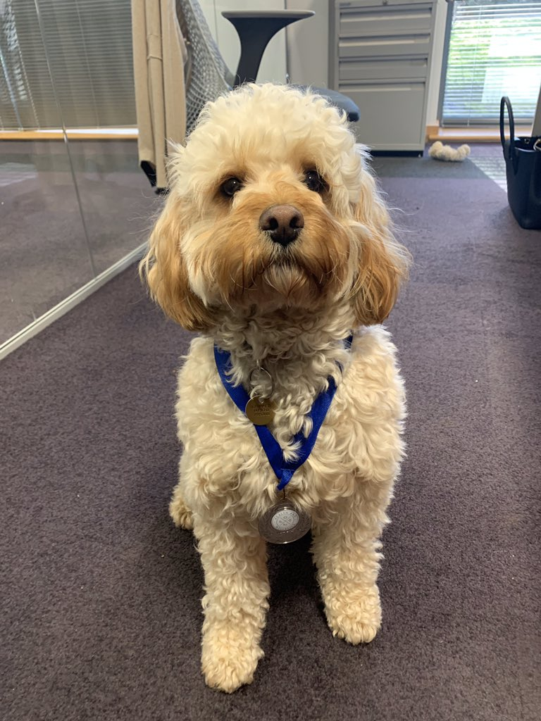 Rupert has earned his Be A Champion medal with lots of walkies and healthy snacks. His mindset is always pawsitive and he is a pro at naps.  Good boy Rupert!  @JamiePeacock10 #DogsofTwitter #dogs #dogslifepic.twitter.com/YtlnKR4fQJ