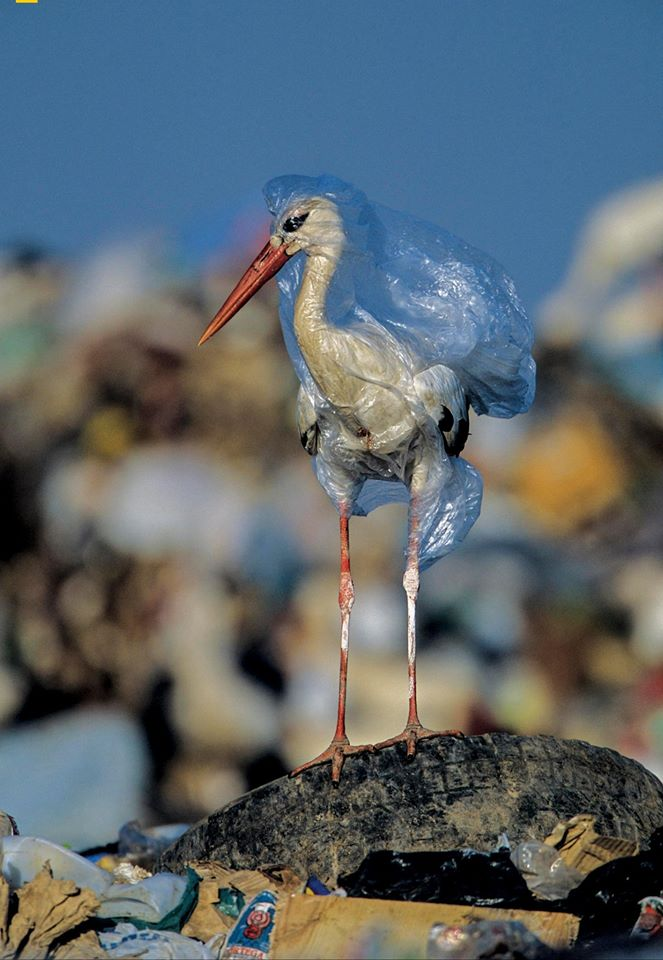 Plastic Pollution in one image. FB: ourplanet
