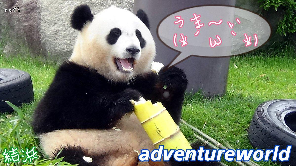 写真で遊んでみた🐼今夜は結浜ちゃん😉 #写真で遊んでみた #アドベンチャーワールド #白浜  #結浜 #パンダ #子パンダ #かわいい #癒し  #panda #giantpanda  #yuihin #cute #pretty #baby #カメラ好きな人と繋がりたい #aws #linecamera #my_eos_photo
