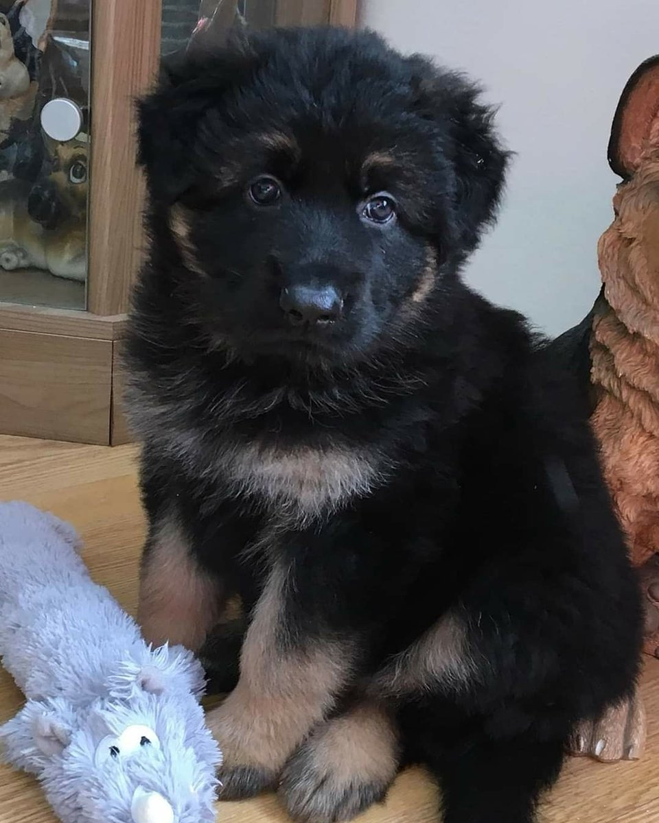 So my sister is getting a new puppy that she'll pick up in a couple of weeks time. World, meet Murphy 🐕 #cute #puppy