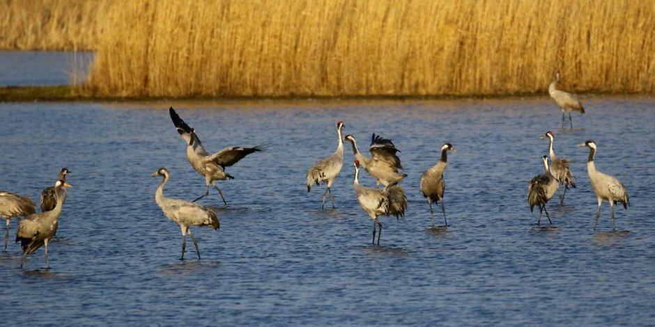 Rund 250 Tiere legen im Froser Feuchtgebiet einen Zwischenstopp ein.(MZ+) https://ift.tt/2HWvMu7pic.twitter.com/OYk3pKPahl