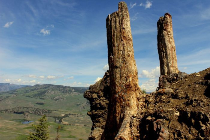 The petrified forest is one of the most breathtaking things you'll encounter in Wyoming. Hiking among 55 million old fossilized trees is indeed a walk through history. ~ #NatureLovers #travel