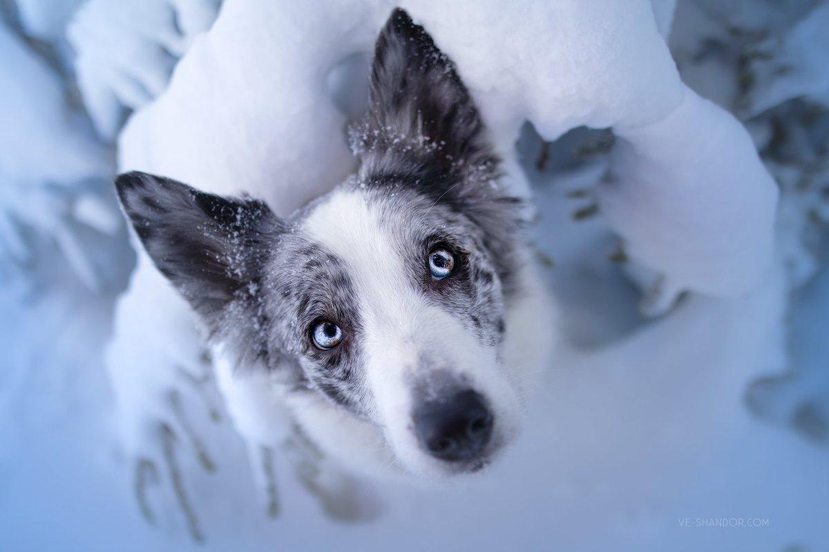 Freezy blue gaze.  @viewbug #dogphoto #dog #veshandorphoto @dodopic.twitter.com/tCxVXAnODv