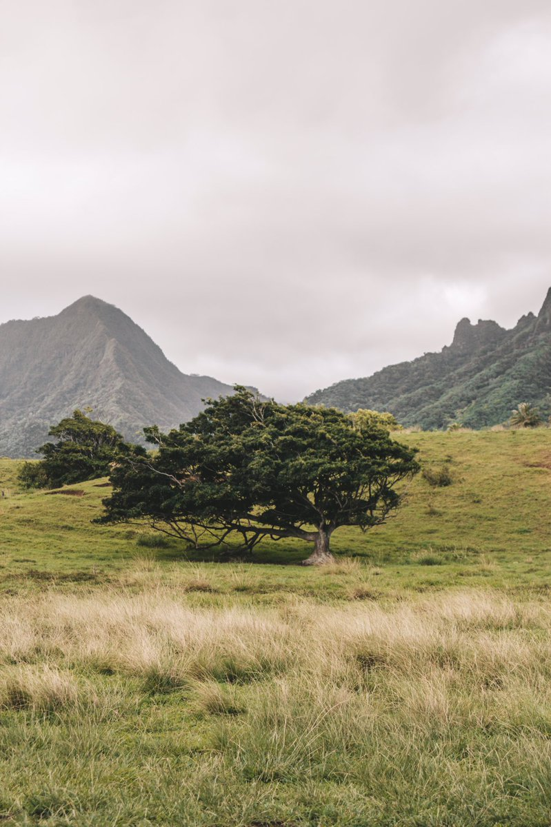 Moody vibes 📸 #CANON #canonphotography #Hawaii #vsco #MoodyMagic #photography #PhotoOfTheDay #naturephotography #naturelovers #ExploreTogether #fotografia #adventure