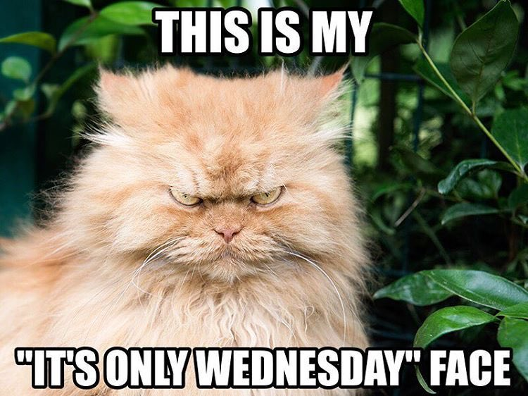 "Who can relate to this ""It's only Wednesday"" face? 😂🐱🐾 Visit 👉👈 - - - #wednesdaymorning #WednesdayThoughts #WednesdayVibes #WednesdayWisdom #WellnessWednesday #wednesdaymotivation #CatsOfTwitter #kitty #cat #pet #love #lol #shopping #sales #gift #shop"