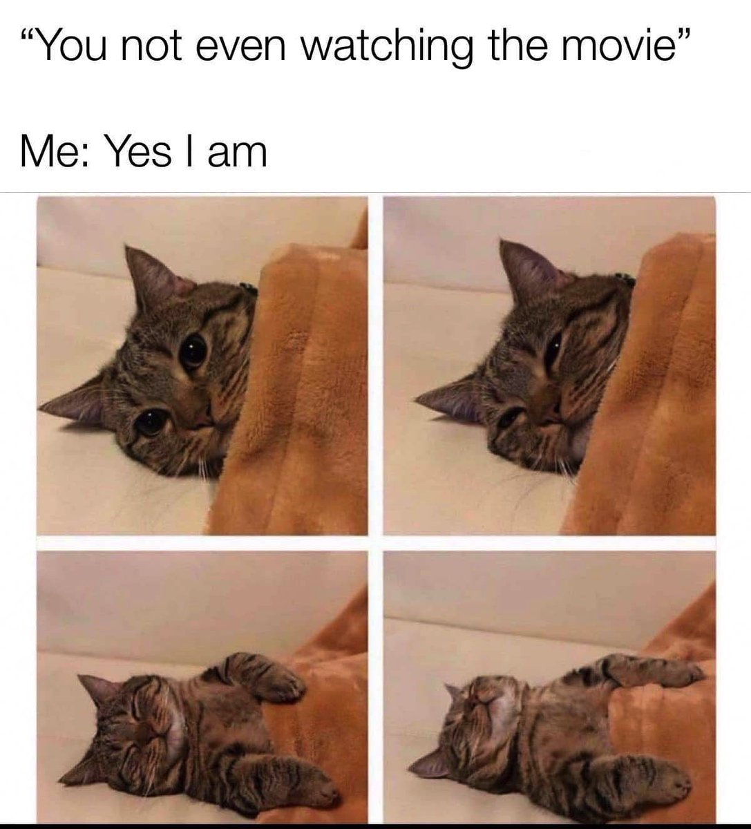 Us when watching #movies! 😹 #cat #catmemes #memes #memesdaily #movie