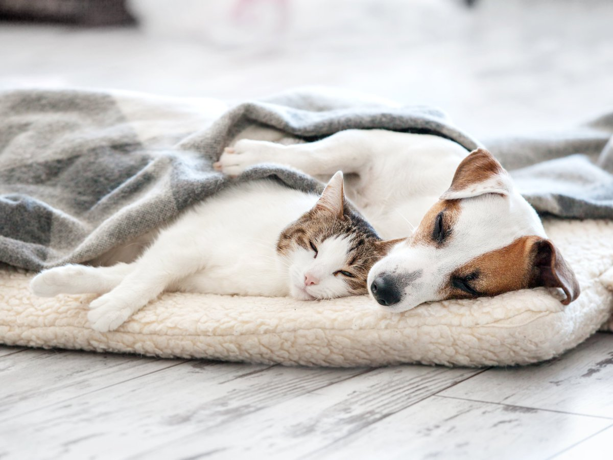 Having a pet that suffers from chronic joint pain or arthritis can be difficult to cope with, but there are changes you can make to your home and your pet's lifestyle to help manage their condition. 👉 #dog #cat #arthritis