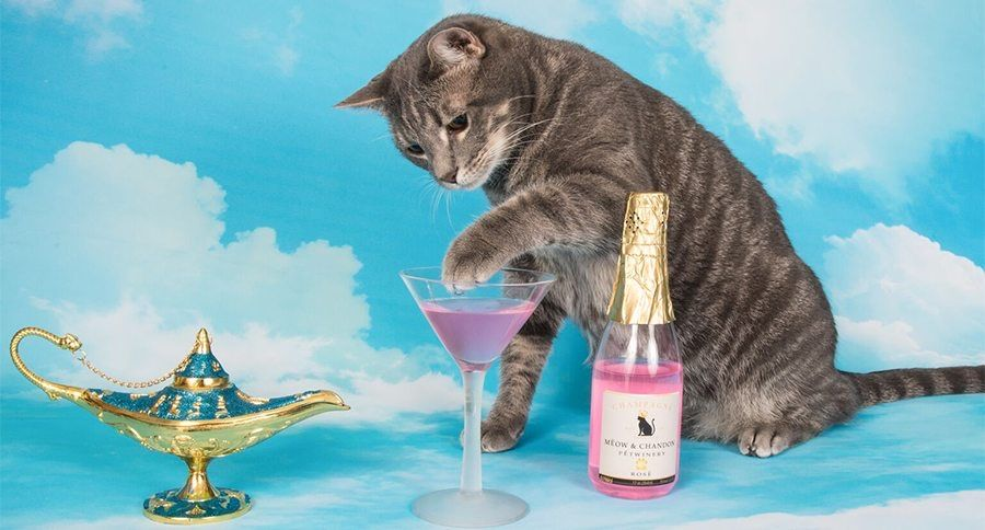 Apparently National Drink #Wine With Your #Cat Week is a thing every third week of February now and we missed it! Ah well, next year...    #winedrinkers #catlovers #oddholidays