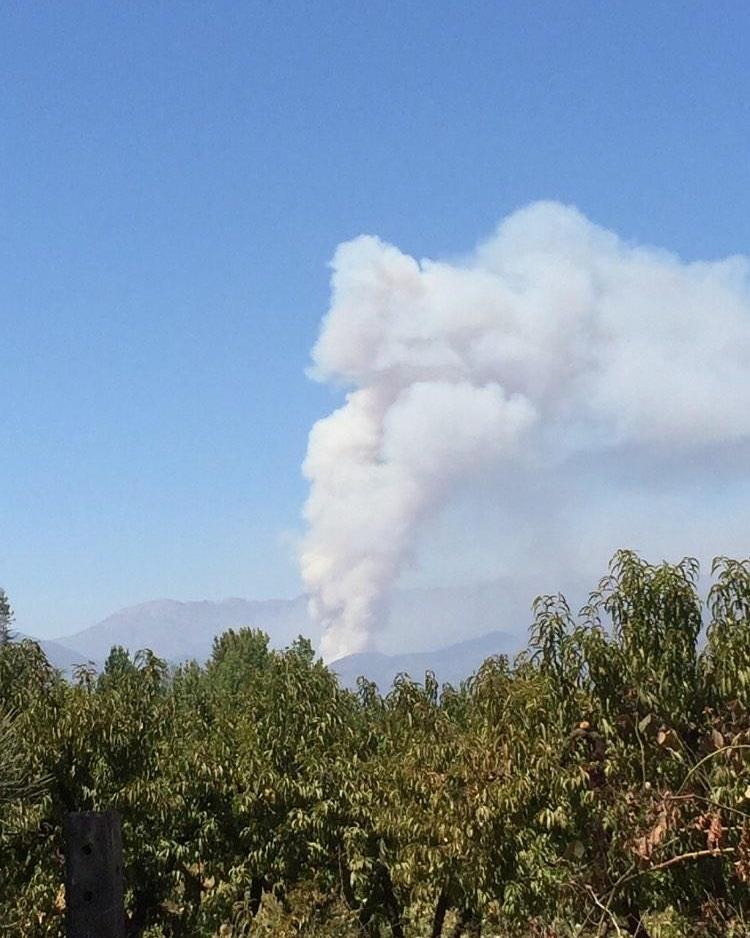 #O'HIGGINS 🔥  Incendio forestal denominado La Patagua, en #Requínoa, afecta hasta el momento a 150 hectáreas.   Recursos presentes en el lugar: 5 brigadas, 1 camión aljibe, 1 equipo de agua, 2 aviones, 3 helicópteros y 1 puesto de mando.  Foto: d.machmar.