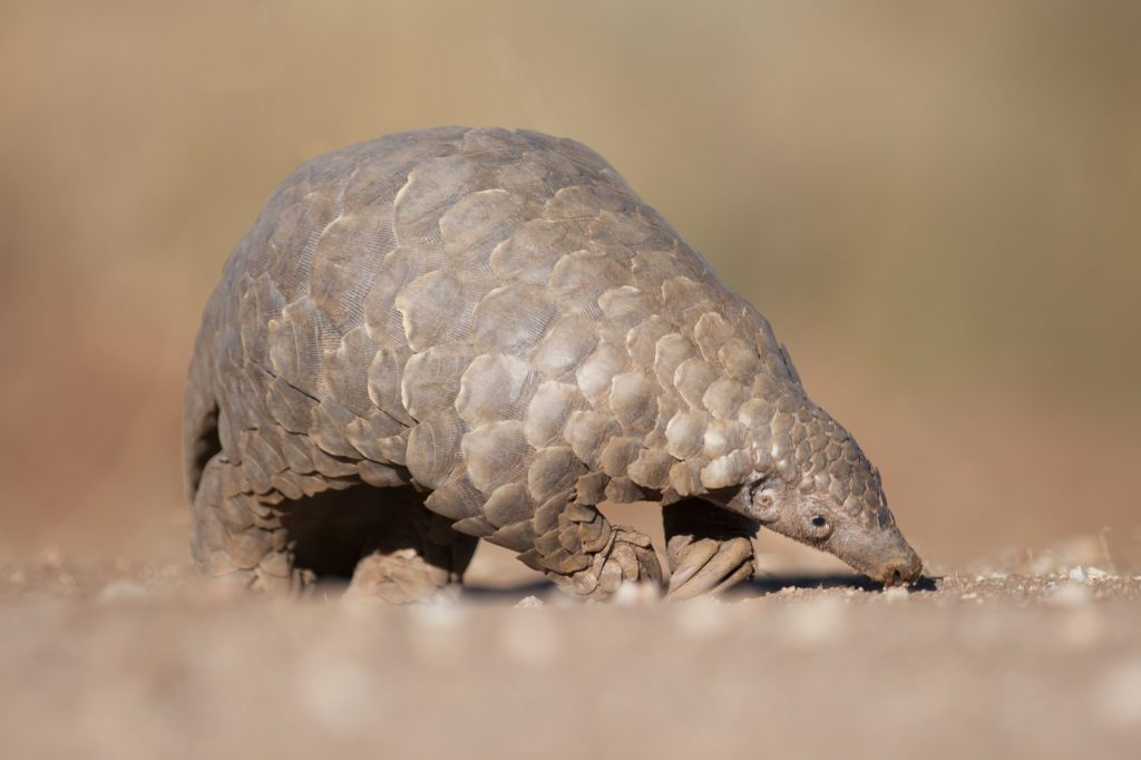 They are focusing on a type of armadillo.pic.twitter.com/dYWFLADRjd