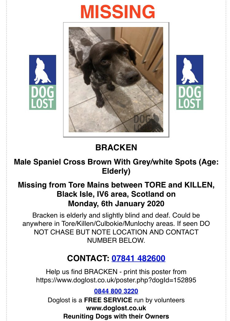 #SpanielHour BRACKEN IS AN ELDERLY GUY WHO IS #Lost IN ALL THIS BAD WEATHER Male #Spaniel x Brown with white/grey spots #ToreMains between #Tore & #Killen #BlackIsle 🏴󠁧󠁢󠁳󠁣󠁴󠁿 #IV6 6/1/20 hes #Dementia going #blind n #Deaf @BlackIsleGroup @Killensteak doglost.co.uk/dog-blog.php?d…