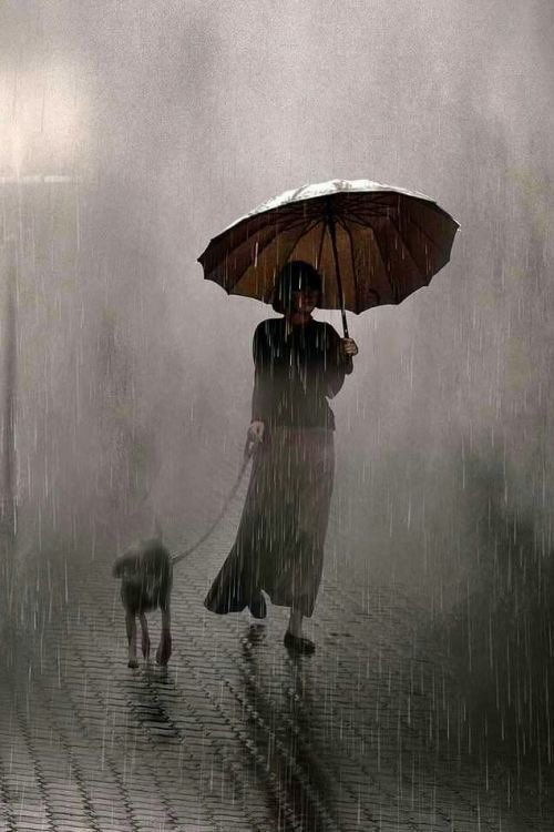 It is not where it is or what it is that matters, but how you see it. Saul Leiter. La promenade du chien.