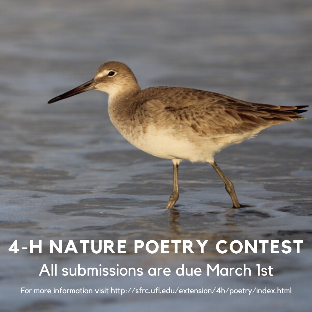 All submissions are due THIS Sunday, March 1st! 💻 : sfrc.ufl.edu/extension/4h/p…
