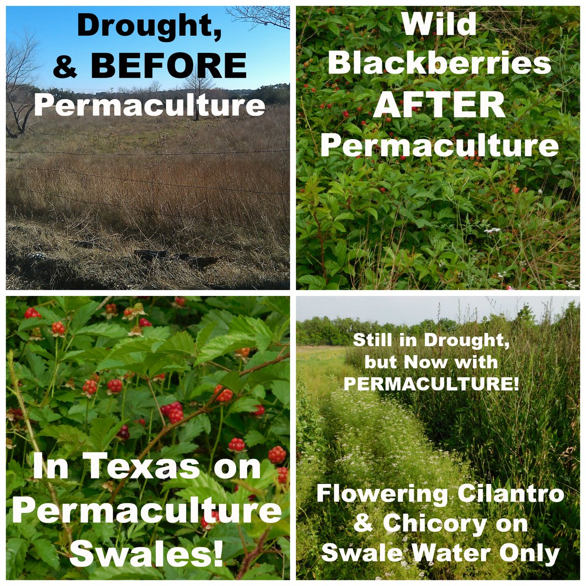 The Possibilities of #Permaculture...  https://www.pinterest.com/farmfairycrafts/organic-gardening-permaculture/…pic.twitter.com/7JFPn0ec5v
