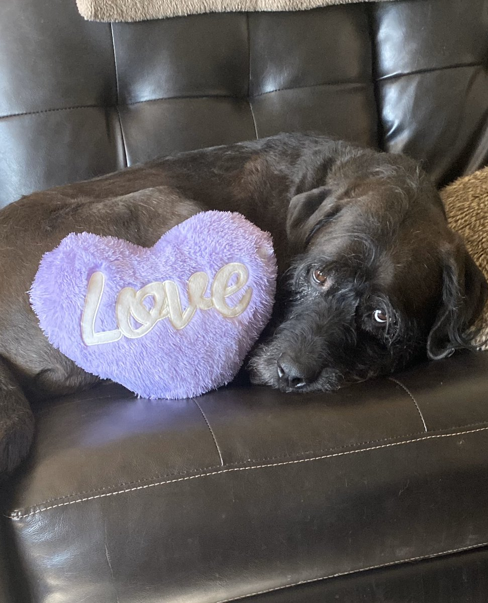 With all my heart #bulldoodle #mandog #goodboy #souldog #mysunandstars #myheartandsoul #tothemoonandback #muppetdog #pawsome #dogislove #bestdogever #mylove #myeverything #dogswithbeards #rawfed #rawfeddogpic.twitter.com/ArvCwuO2QS