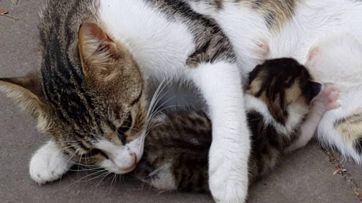 Compassionate mom #Cat and her cute ...   #Cats #Cat #Kittens #Kitten #Kitty #Pets #Pet #Meow #Moe #CuteCats #CuteCat #CuteKittens #CuteKitten #MeowMoe   #2016 #Animal #Animals #Baby #Cats #Compilation #CuteCat #CuteCatsVideos      .