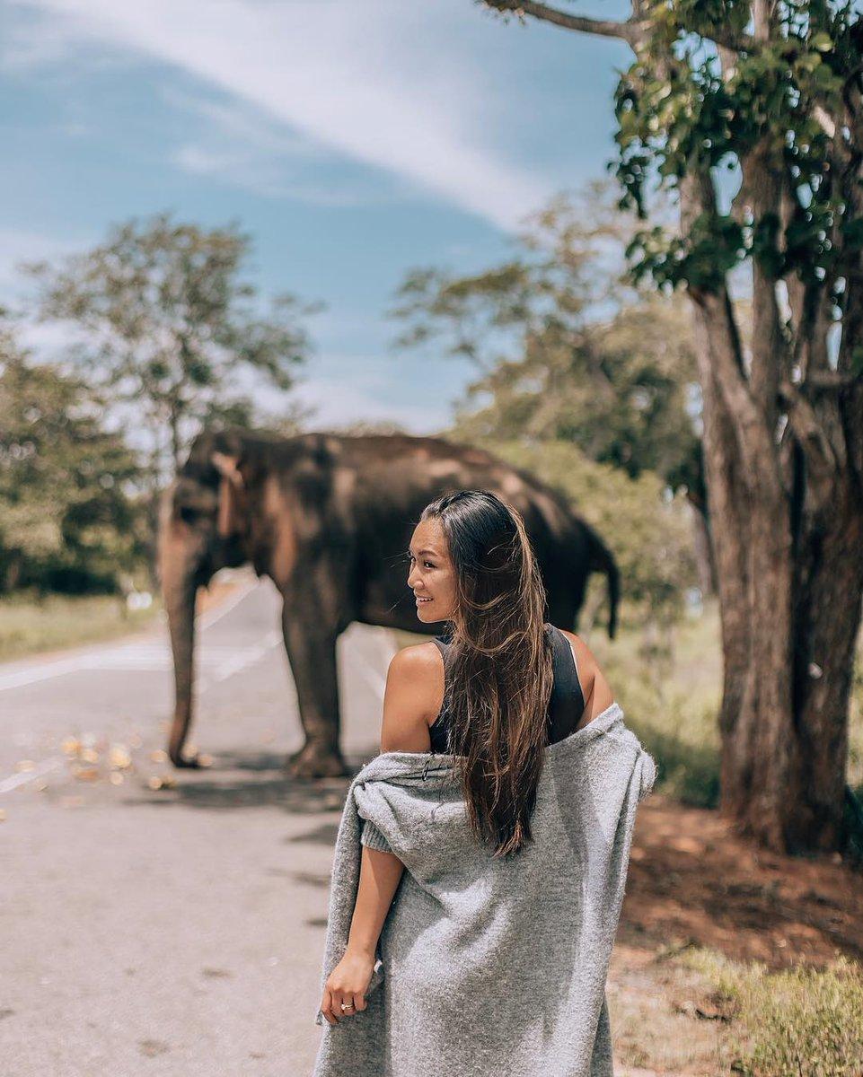 http://www.imperialyalasafari.com welcome to yala srilanka book a safari jeep tour #TBT #PINK #studyabroad  #places #exploring #travelgram #wanderlust #instatravel #escape #backpacking #likeforfollow  #fallowtrick #travelgram #picoftheday #yala #ella #weligama #ahangama #hikkaduwa #bentotapic.twitter.com/M4dKaUGuO5