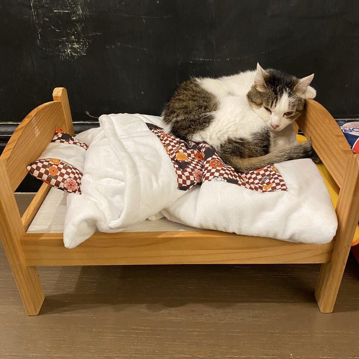 いいにゃあ🛏🐱  #ofutoncatbed #bedforcat #cat #catlover #catcrazy  #お布団キャットベッド #猫のベッド #ネコセカイ #ねこ #ねこばか #ねこすきさんと繋がりたい