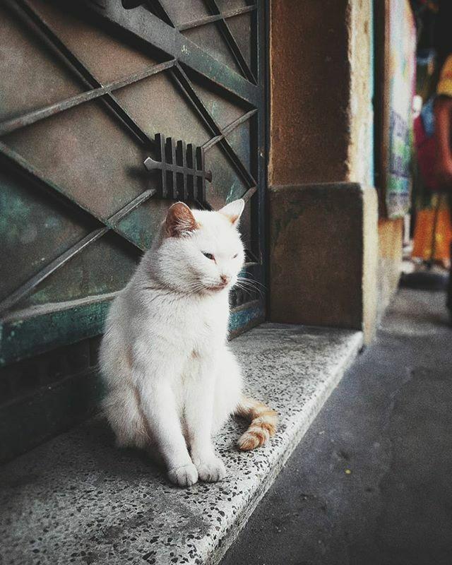 Pondering... #White #Cat #Guatemala #Samsung #GalaxyS8