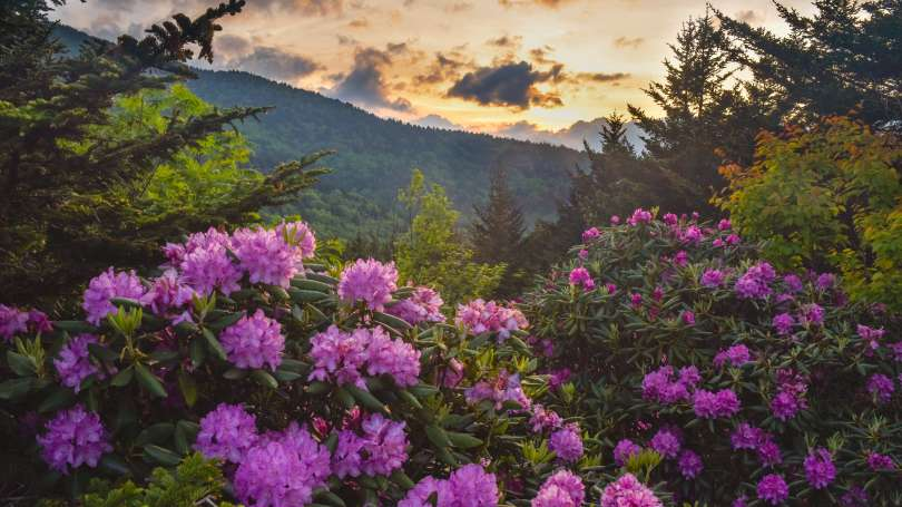 The countdown to spring is on! Here are 7 of our favorite places to see wildflowers in Asheville: . #springtravel #spring #wildflowers #Asheville