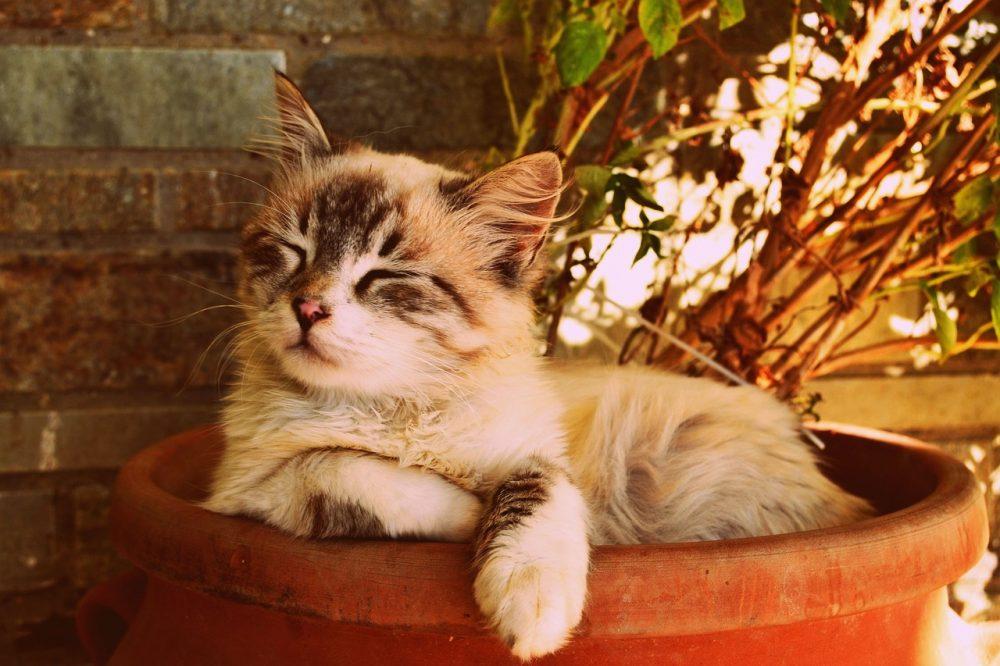 USBigStore #kitten #asleep #in #a #pot #beautiful #cat #asleep #pet #portrait #usbigstore