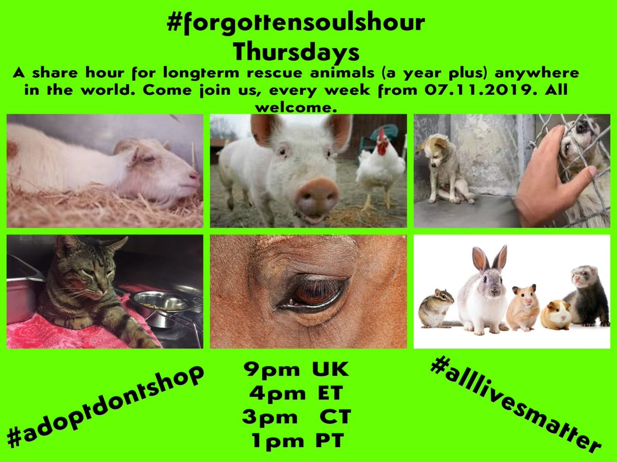 #PleaseRT & tell your #anipals #please join #forgottensoulshour 9pm (UK) tonight! #ThursdayMotivation @The_Animal_Team @EGLR1 @NiallNewHope @8BelowHuskyResc @JoDeanoSmith @MCAshares @MillieOTLFP @aponyhour @PINScotland16 @HilbraesDogs @Cherrycakes76 @HopeRescue @AndLabus 💚
