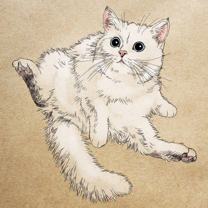 おしゃれ猫のtwitterイラスト検索結果 古い順