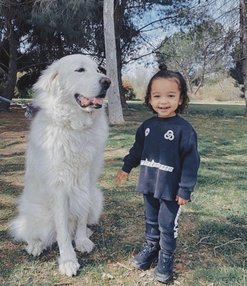 My Chi girl loves doggies!!!