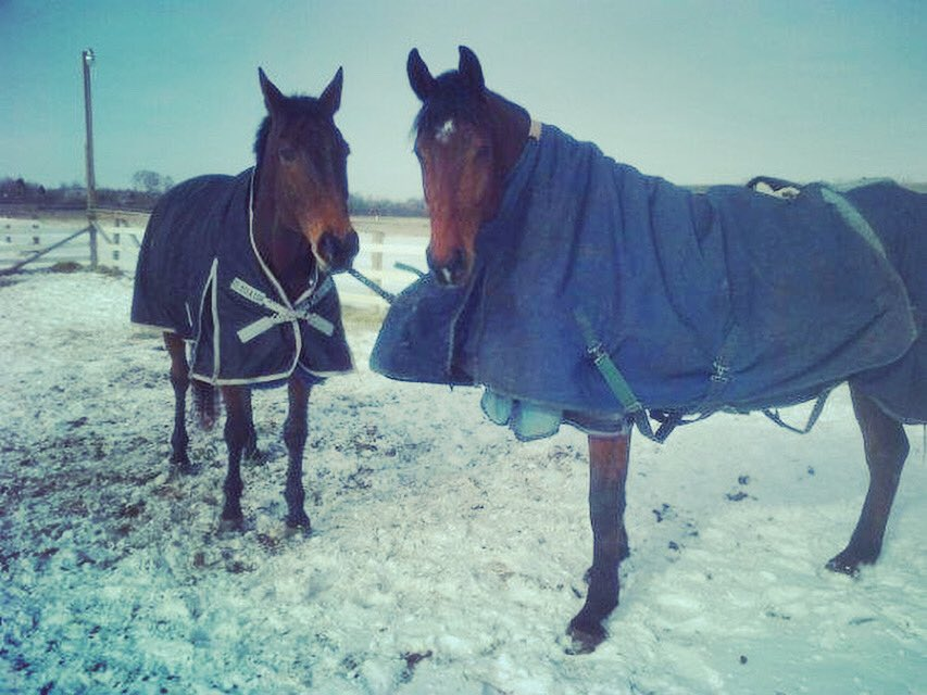 Horses.  • • • #ididntdoit #hedidit #geldings #troublemakers #badhorse #youreluckyyourecute #thisexplainsalotactually #winterblankets #repairswillberequired #equestrian #equestrianlife #horselife #boyswillbeboys #horsesgonnahorse #waybackwednesday #winterhorselife #uhohpic.twitter.com/Vl9W8dJqaF