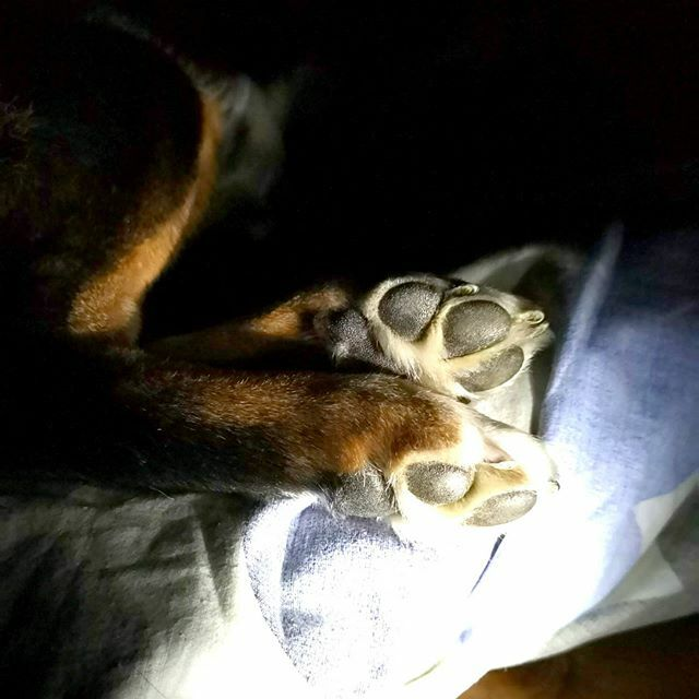 #appenzellersennen #appenzellersennenhund #appenzellermountaindog #mountaindog #dog #doglover #dogofinstagram #like4like #lfl #bouvierappenzellois #chien #appenzeller #sennenhund #bernersennen hund # #mateomylove #entlebucher #hundefotografie #entlebuche… https://ift.tt/2PujzBcpic.twitter.com/OZmKqGl5Kp