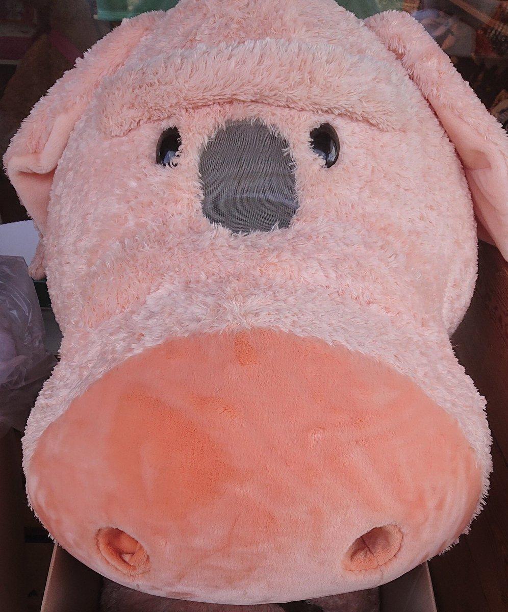 Je mehr künstlich hysterische Säue durch's Dorf getrieben werden, je häufiger trifft man ja dieses ziemlich entspannte Kein Schwein, das es interessiert. Das fragt halt nur keiner. pic.twitter.com/gjAGKLY86r