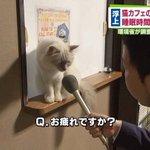 猫カフェの猫は働きすぎ?猫にインタビューした画像が話題!