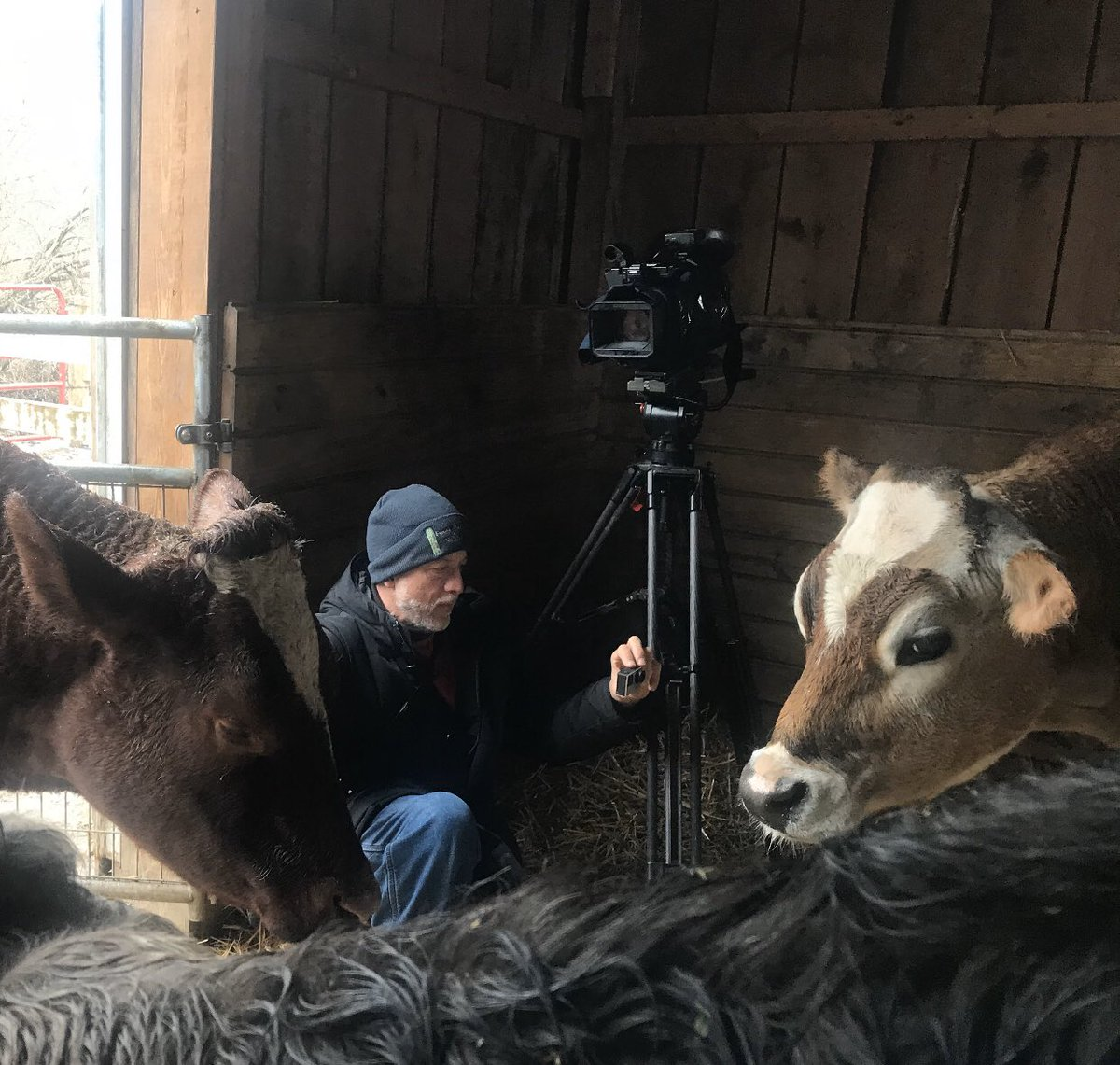 Behind the scenes filming of Asha's Farm Sanctuary's rescued animals for Channel 2's (WGRZ) The Outdoors series. The show is scheduled at 7:20 AM this Sunday! Special thanks to @BelkeTerry Photojournalist and Producer of The Outdoors. @WGRZ @WNYVegFestpic.twitter.com/qEbJsmXVsP