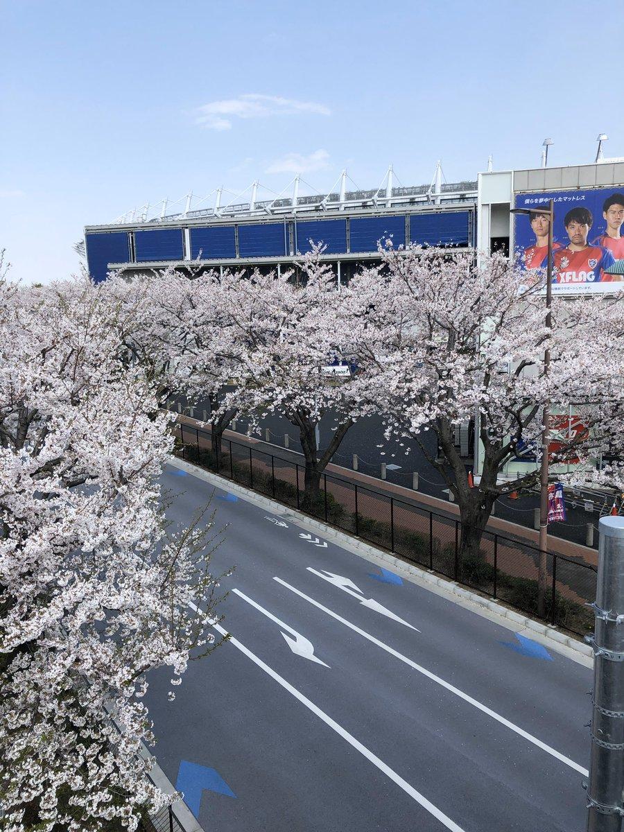 日本全国に美しい桜が楽しめるスタジアムがある。桜の季節までには、世の中が落ち着いていてほしい。桜もサッカーも思いっきり楽しめますように。ひらはた