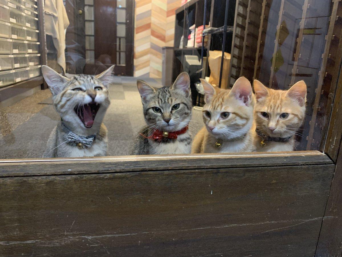 いろいろ不安な日々ですが、こんな時だからこそ笑顔を絶やさず...こちらの写真で猫大喜利でもしてみませんか?#しまや出版癒し課 #猫大喜利