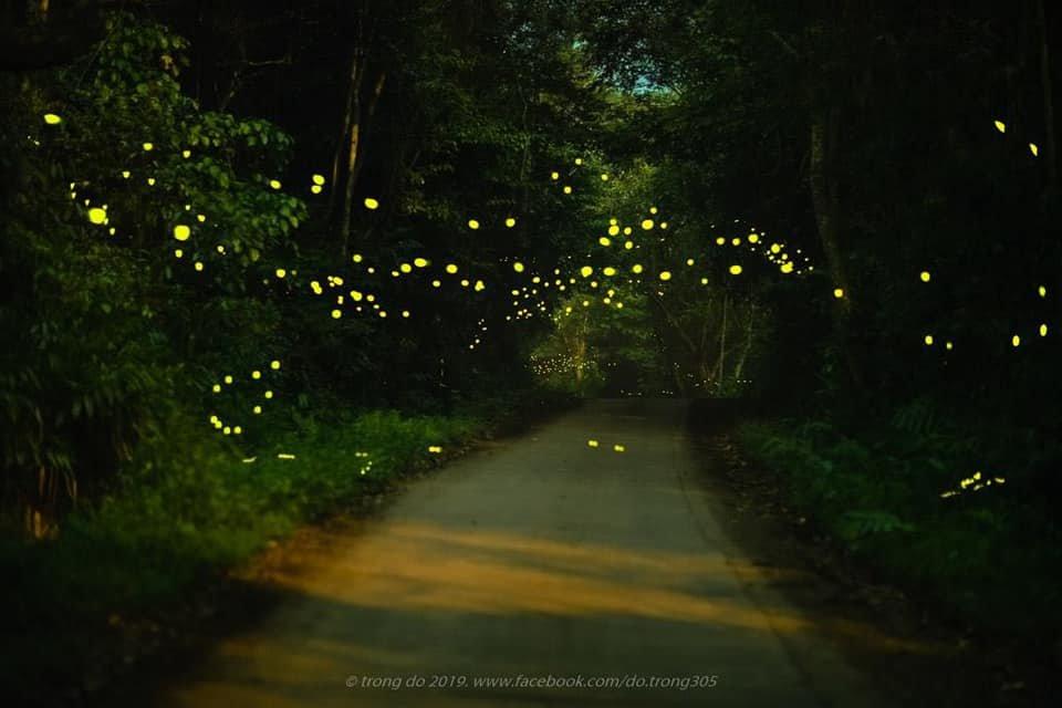 parkling firefly season in Cuc Phuong national park The light of fireflies in the middle of Cuc Phuong national park will make you feel lost in wonderland. Photos: Do Trong #vissaininhbinh #vissaihotel #ninhbinh #Vietnam #cucphuong #travelvietnam #beautifulworld #Vietnampic.twitter.com/DO5iYeskHc