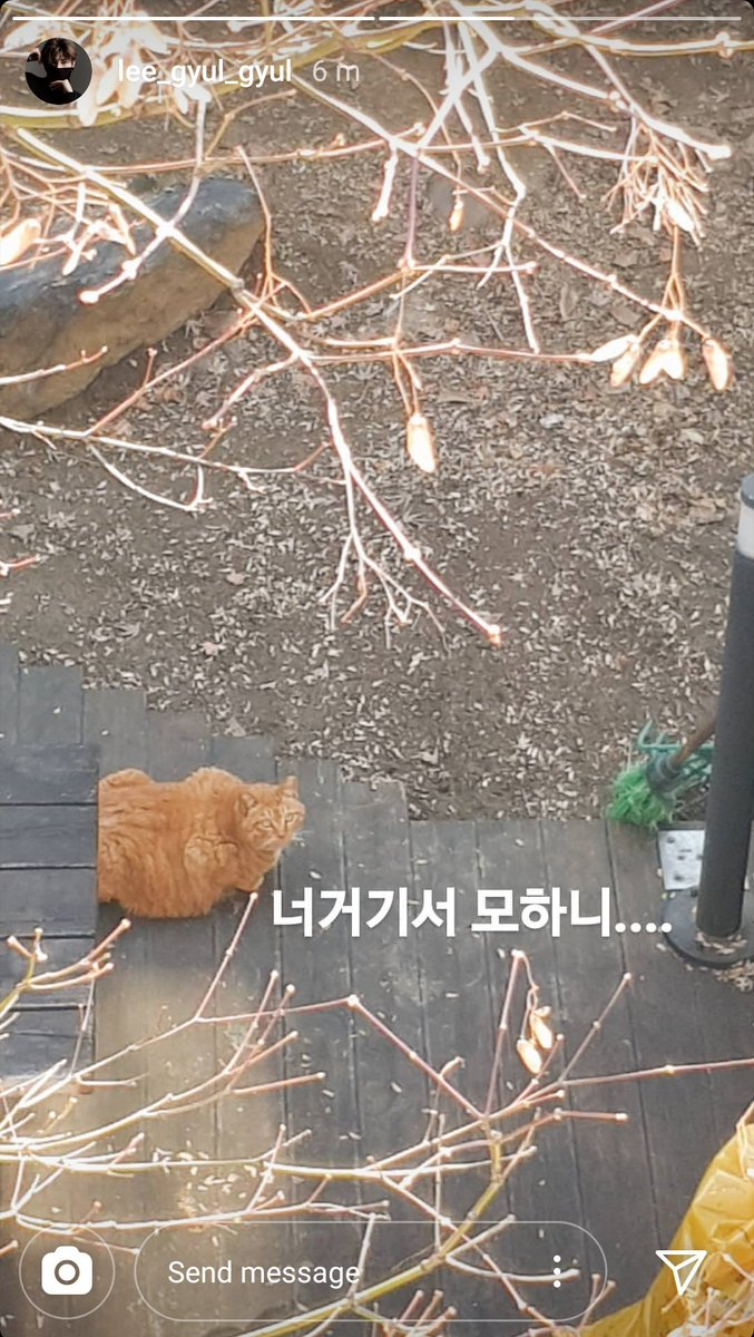 """Hangyul updated IG story   """"What are you doing there?""""   Aww so cute! He's so active lately and the cat is so fluffy omg<br>http://pic.twitter.com/ZbOTKB0yD4"""