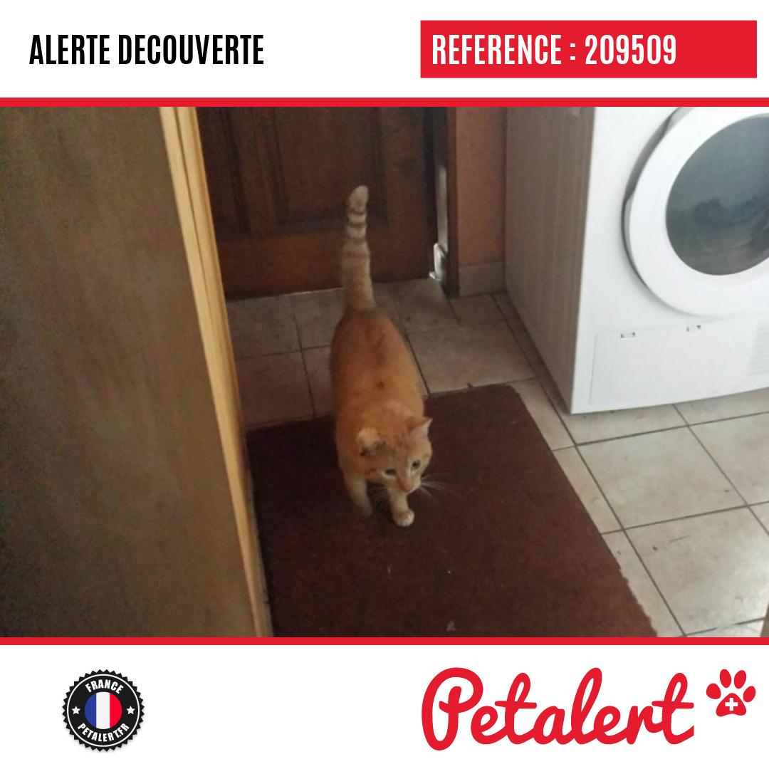 Trouvé #Chat #PasDeCalais #NoyellesSousLens #Petalert  #PetAlert62 / http://p3t.co/CxjxSpic.twitter.com/D63MDo0qcK