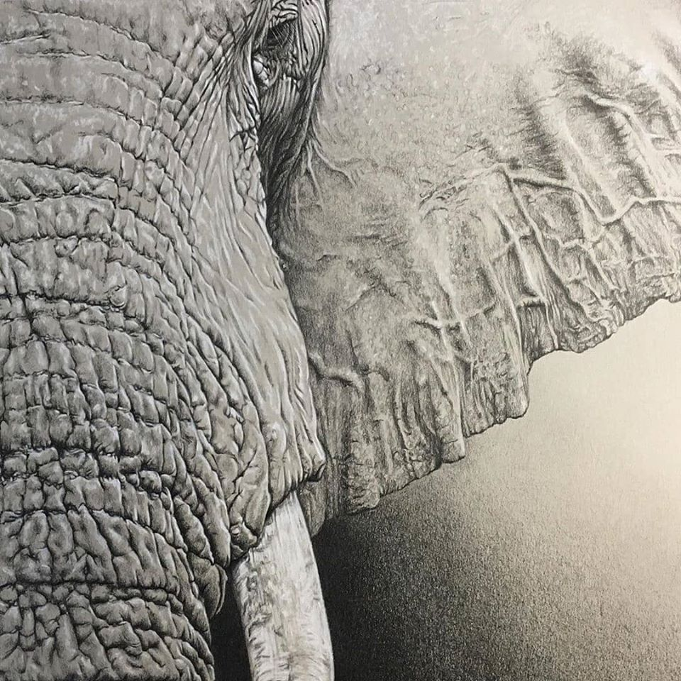 Big Congratulations to Coleen Williams http://www.instagram.com/colartza.  9th place Finalist in our Black & White Instagram Art Competition  Elephant on A3 Fabriano. Coloured Pencil.  #southafricanartist #southafricanart #elephant pic.twitter.com/zfiZZphR3m